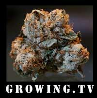 growingtv