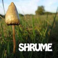 shrume